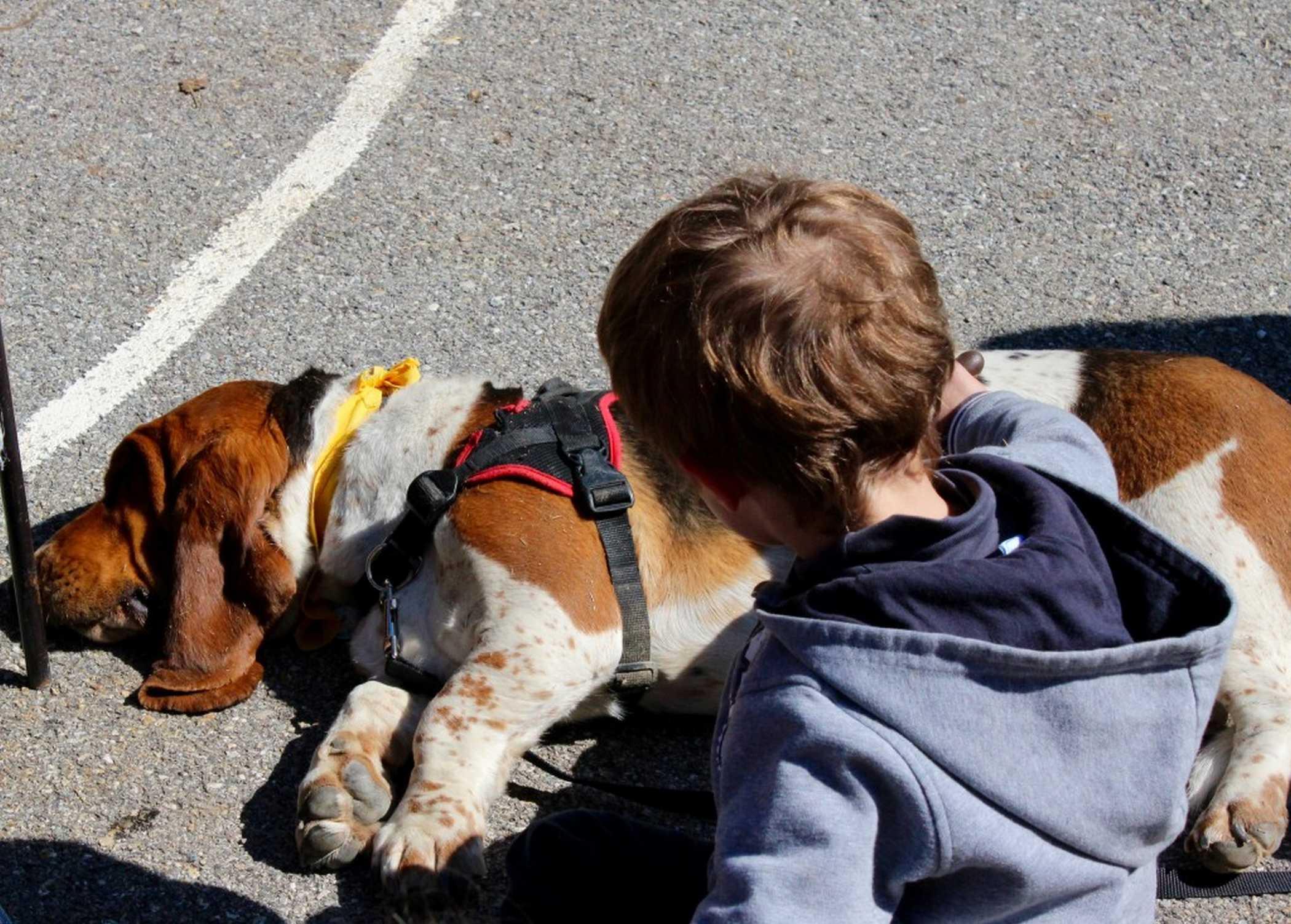 Médiation animale auprès des enfants